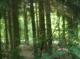 ...im Wald
